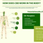 CBD Isolate | full spectrum CBD | broad spectrum CBD | Introducing You To CBD | CBD The Entourage Effect